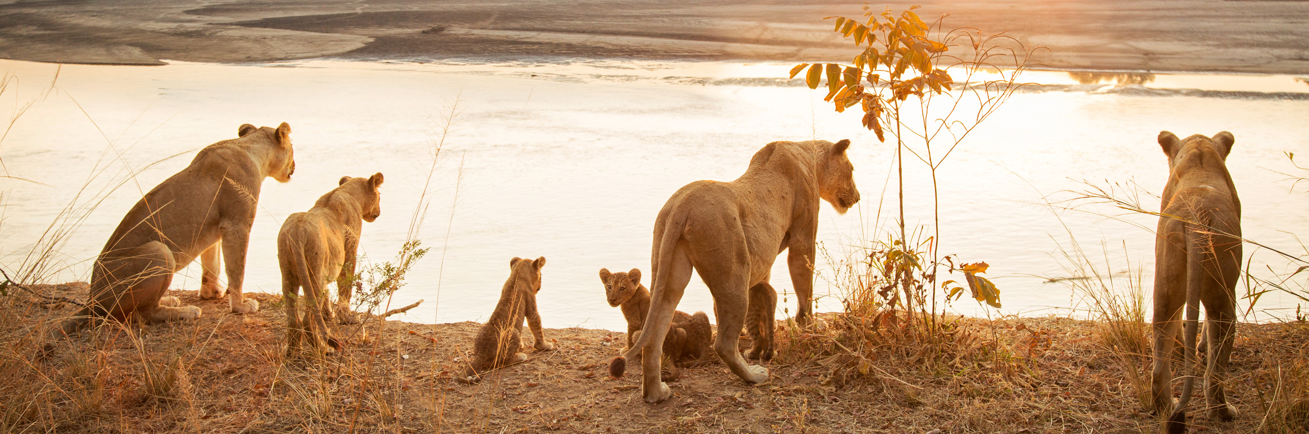 77483685 | Zambia | © Philip Lee Harvey/HUBER IMAGES
